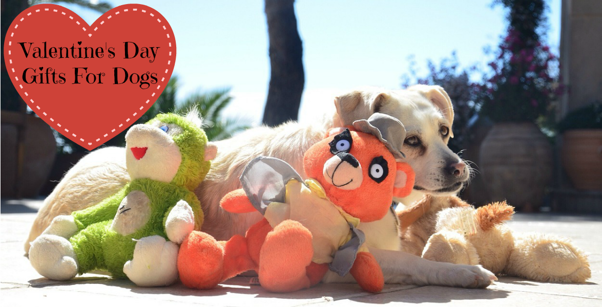 Valentine S Day Dog Toys : Valentine s day gifts for dogs boutique shops magazine